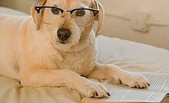 hond leest boek